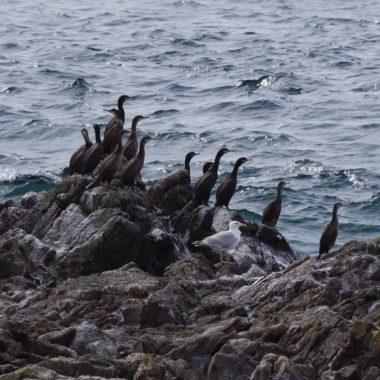 Réalisation d'une étude sur les 11 îles et îlots de l'archipel de Molène, situés hors du périmètre de la Réserve naturelle nationale d'Iroise (29)
